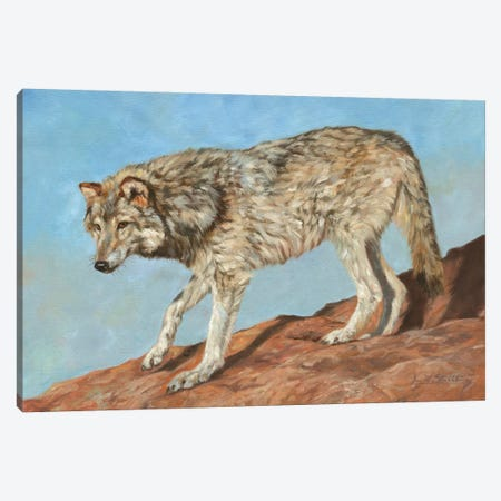 Red Rock Wolf Canvas Print #STG229} by David Stribbling Art Print