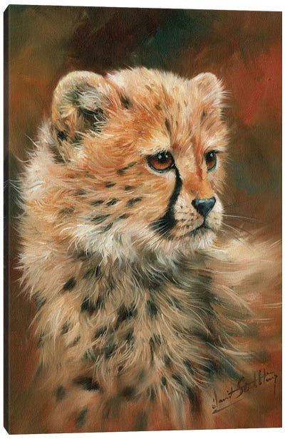 Cheetah Cub Canvas Art Print