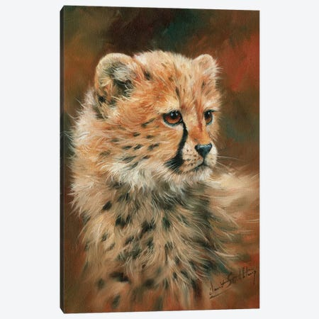 Cheetah Cub Canvas Print #STG22} by David Stribbling Canvas Art