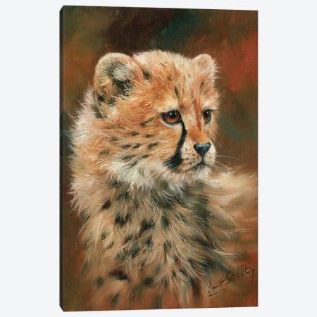 Cheetah Cub Canvas Print #STG22} by David Stribbling Canvas Art