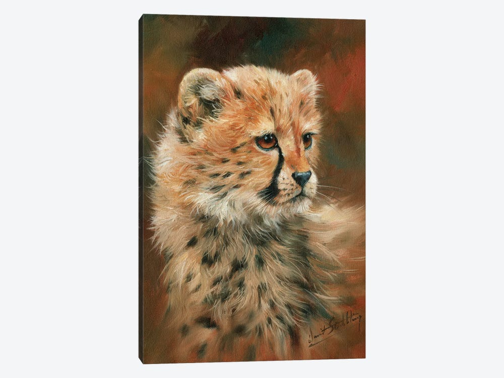 Cheetah Cub by David Stribbling 1-piece Canvas Art Print