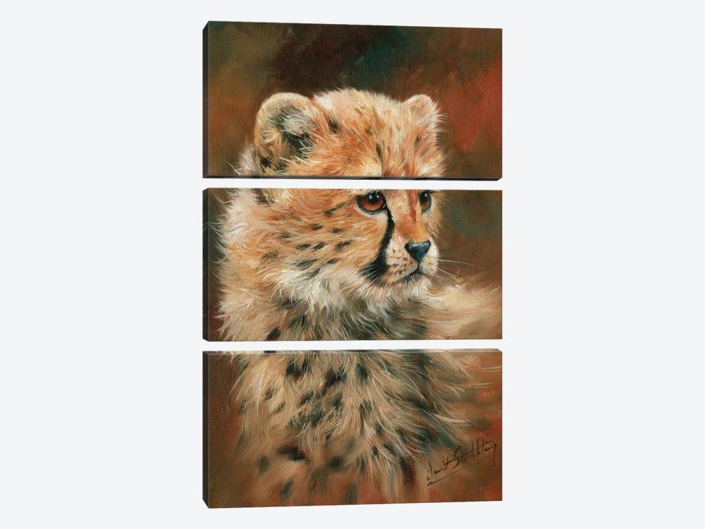 Cheetah Cub by David Stribbling 3-piece Canvas Art Print