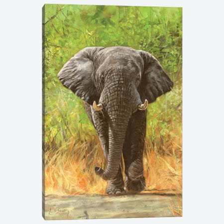 African Elephant Staredown Canvas Print #STG234} by David Stribbling Canvas Art Print