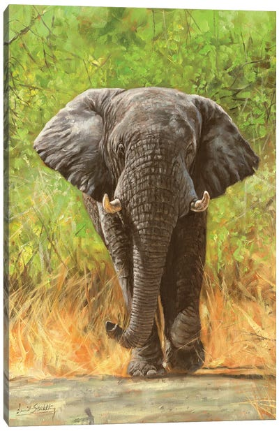 African Elephant Staredown Canvas Art Print