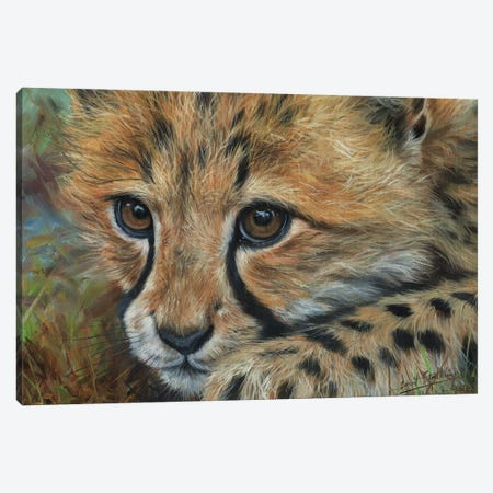 Cheetah Cub Close Canvas Print #STG235} by David Stribbling Art Print
