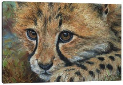 Cheetah Cub Close Canvas Art Print