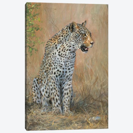 Leopard Male Sitting Canvas Print #STG238} by David Stribbling Canvas Artwork