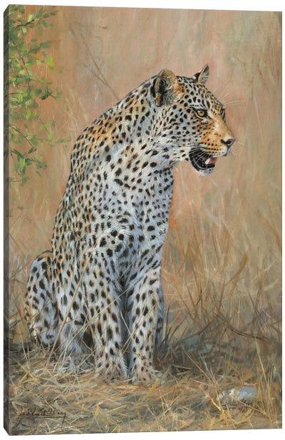 Leopard Male Sitting Canvas Art Print
