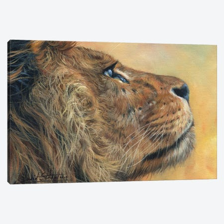 Lion Profile Canvas Print #STG239} by David Stribbling Canvas Art