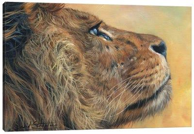 Lion Profile Canvas Art Print