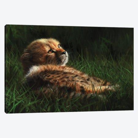 Cheetah Cub In Grass Canvas Print #STG23} by David Stribbling Canvas Artwork