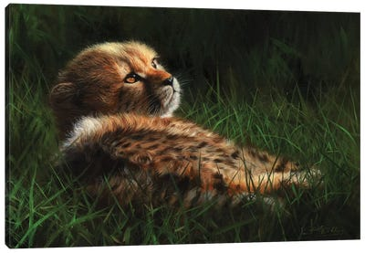 Cheetah Cub In Grass Canvas Art Print