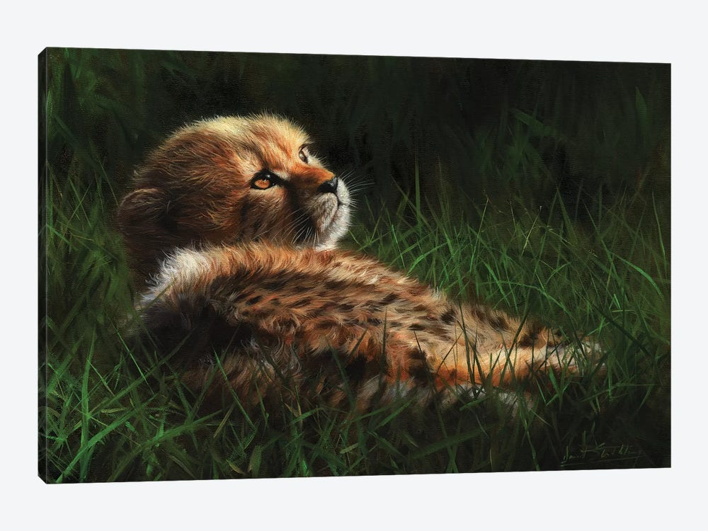 Cheetah Cub In Grass by David Stribbling 1-piece Canvas Art