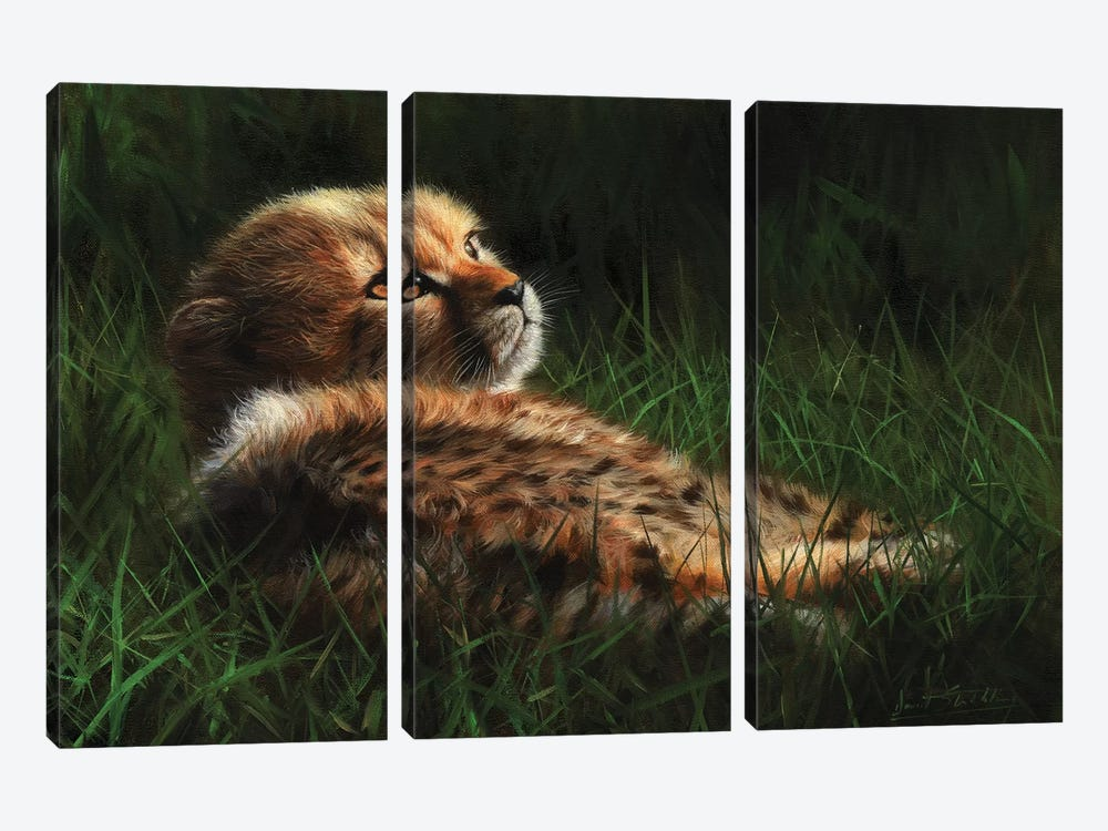 Cheetah Cub In Grass by David Stribbling 3-piece Canvas Wall Art