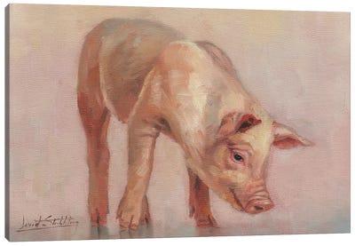 Little Pig Canvas Art Print
