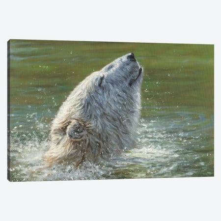 Polar Bear Splash Canvas Print #STG241} by David Stribbling Canvas Print