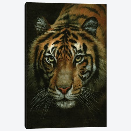 Tiger Portrait Canvas Print #STG242} by David Stribbling Canvas Art Print