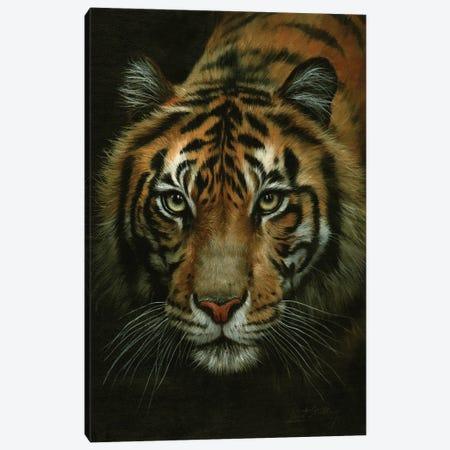 Tiger Portrait Canvas Print #STG242} by David Stribbling Canvas Art Print