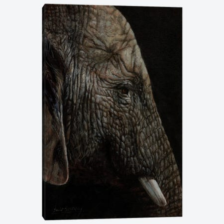 African Elephant Profile Canvas Print #STG243} by David Stribbling Canvas Art Print