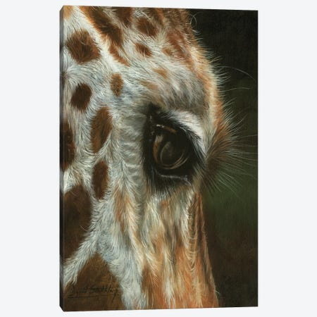 Giraffe Close Canvas Print #STG244} by David Stribbling Canvas Art