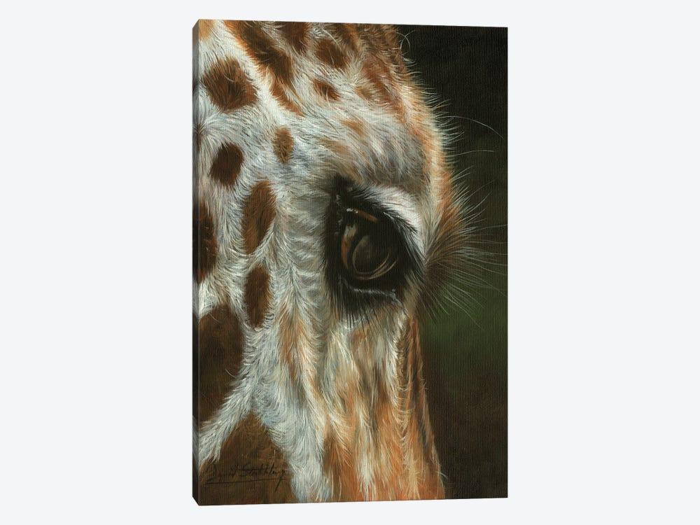 Giraffe Close by David Stribbling 1-piece Canvas Art
