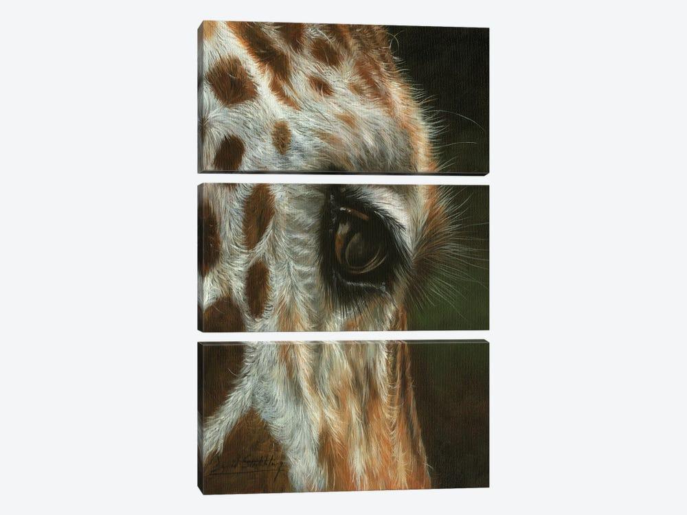 Giraffe Close by David Stribbling 3-piece Canvas Art