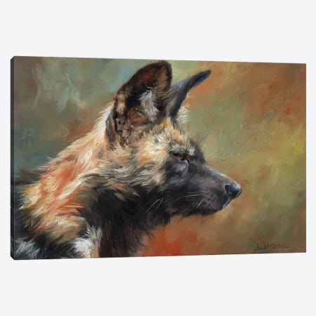 African Hunting Dog (Wild Dog) Canvas Print #STG245} by David Stribbling Canvas Artwork