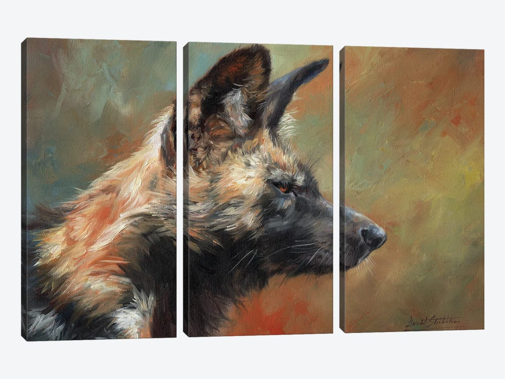 African Hunting Dog (Wild Dog) by David Stribbling 3-piece Canvas Print