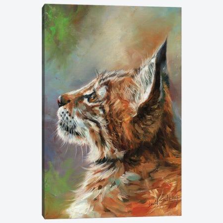 Lynx Wild Cat Canvas Print #STG247} by David Stribbling Canvas Artwork