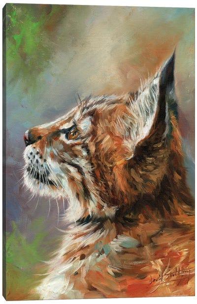 Lynx Wild Cat Canvas Art Print