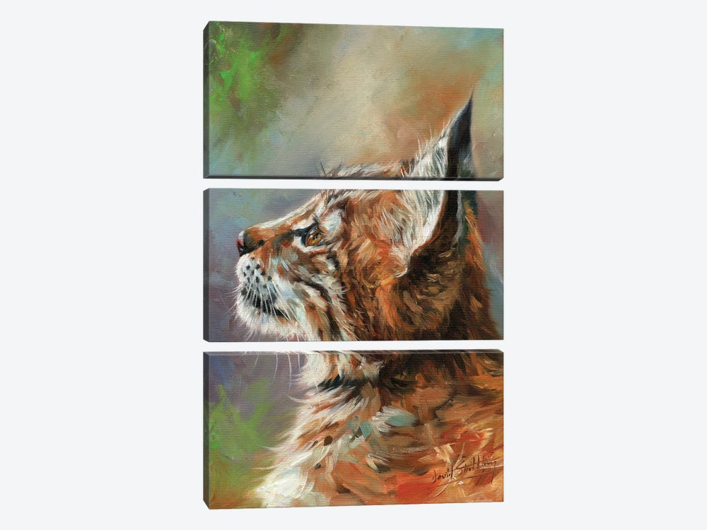 Lynx Wild Cat by David Stribbling 3-piece Art Print