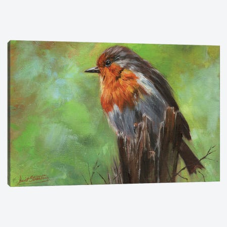 Robin Canvas Print #STG249} by David Stribbling Art Print