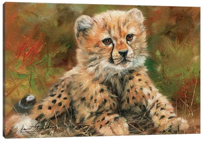 Cheetah Cub Laying Down Canvas Art Print