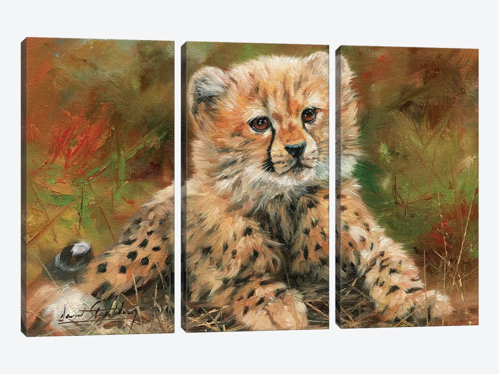 Cheetah Cub Laying Down by David Stribbling 3-piece Canvas Art Print