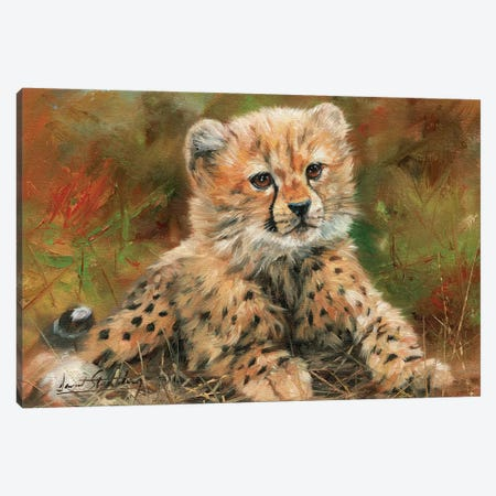Cheetah Cub Laying Down Canvas Print #STG24} by David Stribbling Art Print