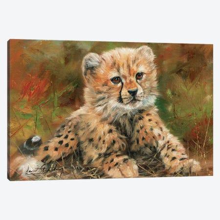 Cheetah Cub Laying Down Canvas Print #STG24} by David Stribbling Art Print