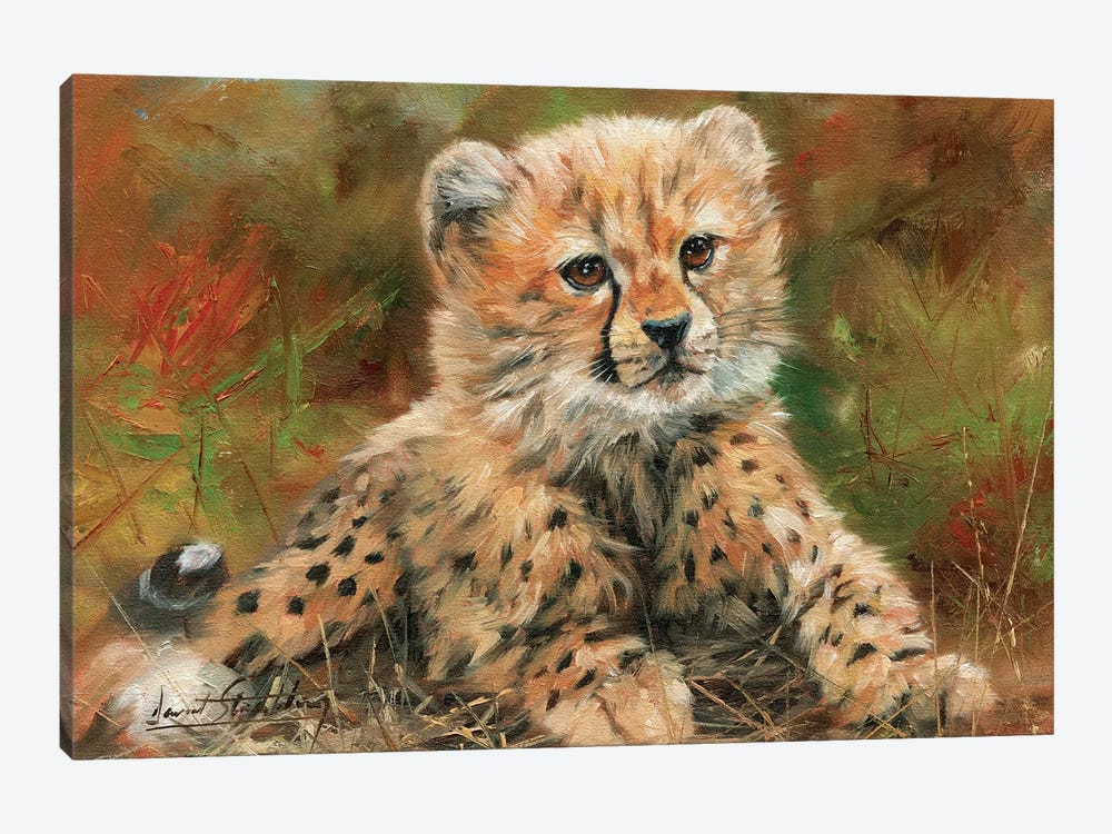 Cheetah Cub Laying Down by David Stribbling 1-piece Canvas Print