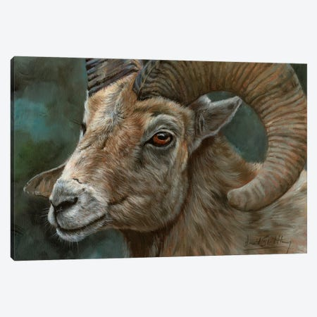 Portrait Of A Bighorn Sheep Canvas Print #STG250} by David Stribbling Canvas Artwork