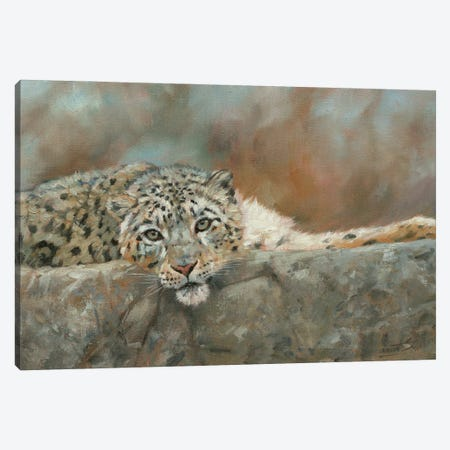 Snow Leopard Repose Canvas Print #STG251} by David Stribbling Canvas Art