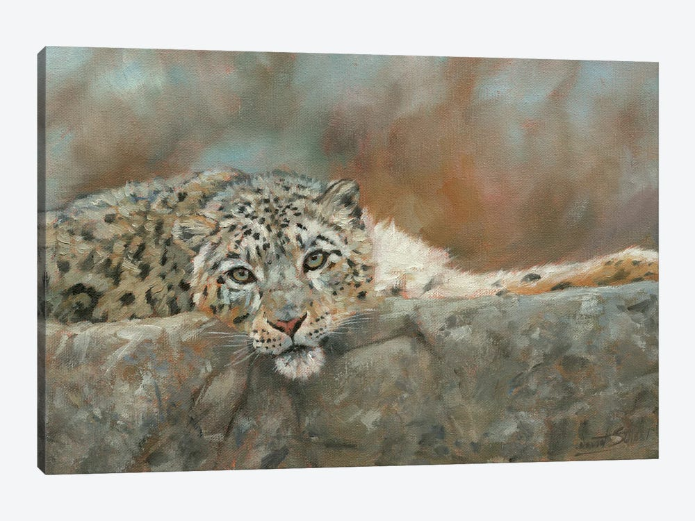 Snow Leopard Repose by David Stribbling 1-piece Canvas Wall Art