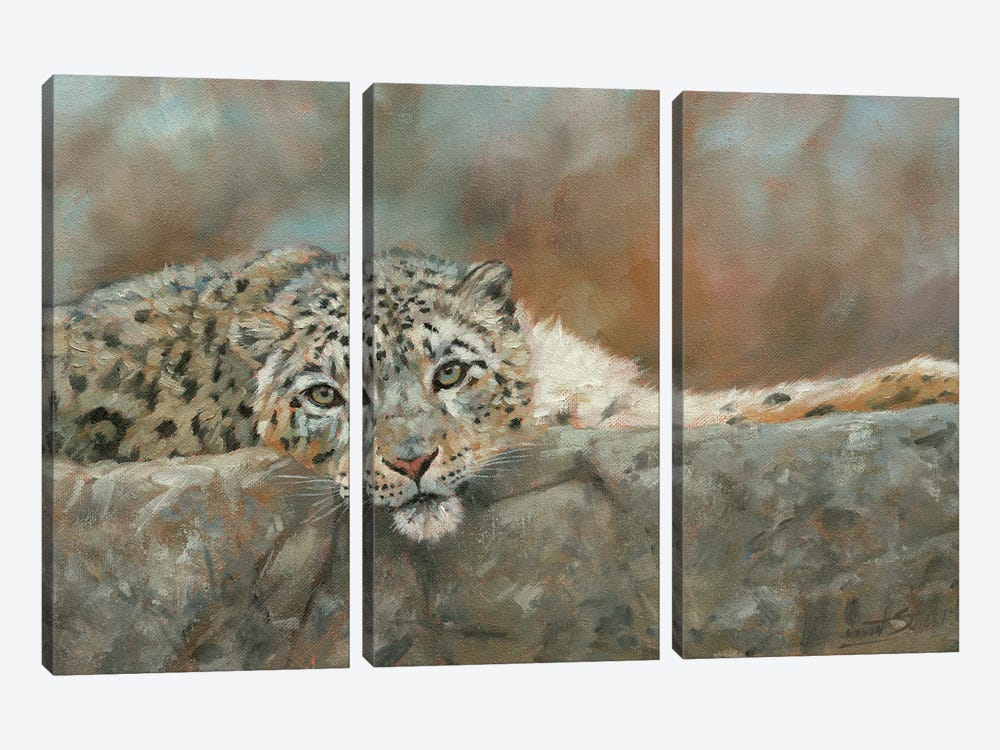 Snow Leopard Repose by David Stribbling 3-piece Canvas Wall Art