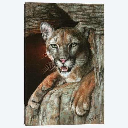 Cougar Among Rocks Canvas Print #STG252} by David Stribbling Canvas Artwork