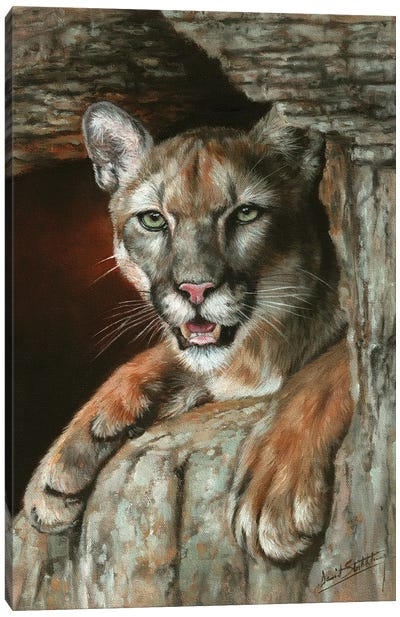 Cougar Among Rocks Canvas Art Print