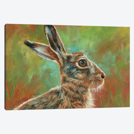 Brown Hare Canvas Print #STG253} by David Stribbling Canvas Art
