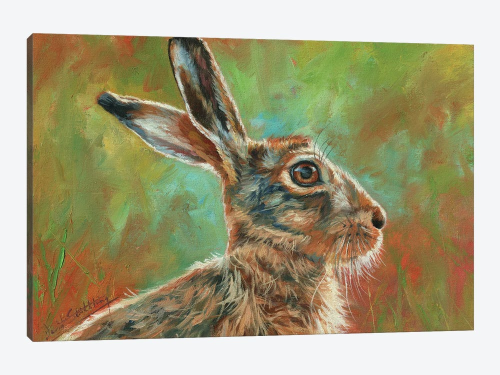 Brown Hare by David Stribbling 1-piece Canvas Artwork