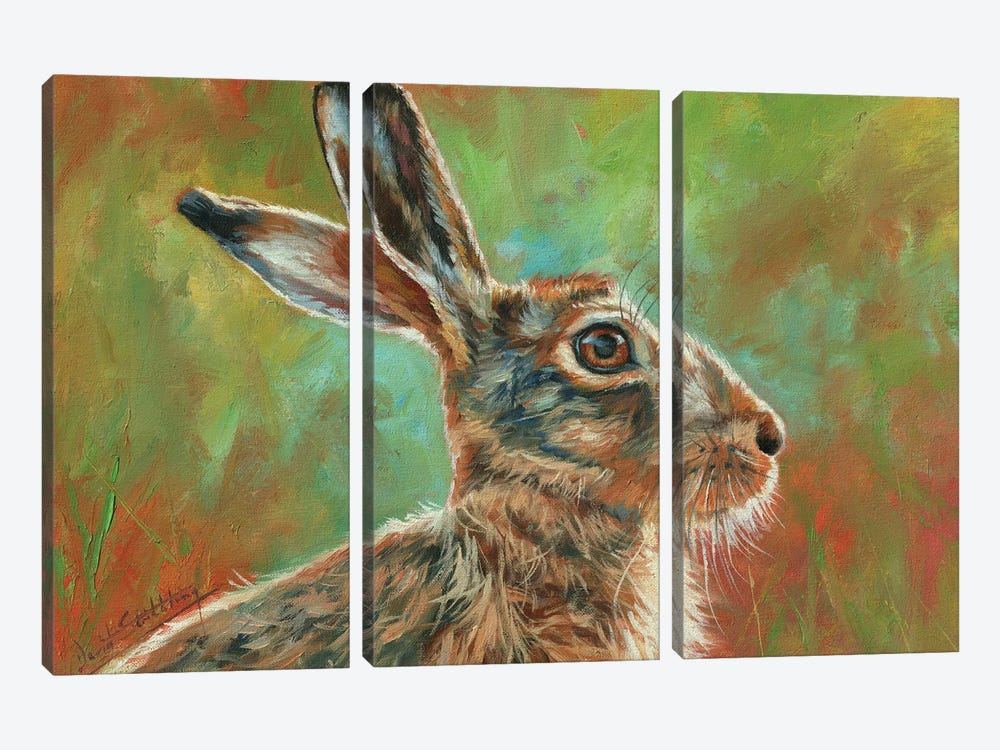 Brown Hare by David Stribbling 3-piece Canvas Wall Art
