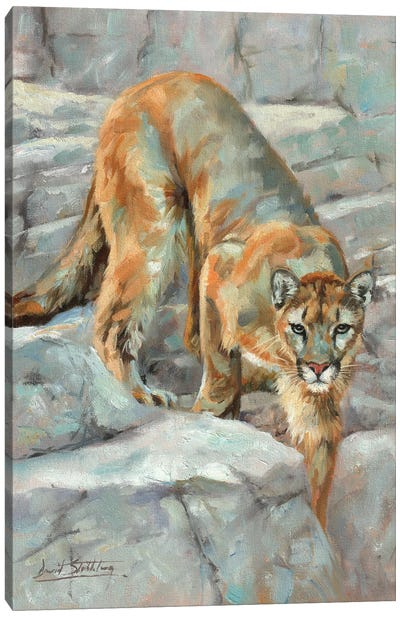 Mountain Lion High Sierra Canvas Art Print