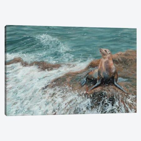 Californian Sea Lion Canvas Print #STG256} by David Stribbling Art Print