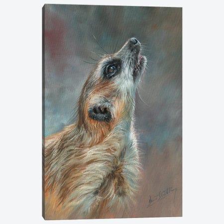 Meerkat Portrait Canvas Print #STG257} by David Stribbling Art Print