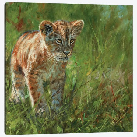 Lion Cub II Canvas Print #STG258} by David Stribbling Canvas Artwork